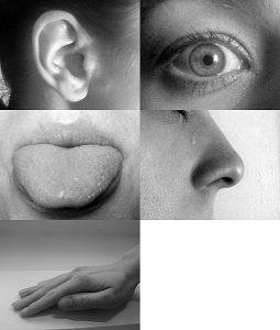 photo five senses