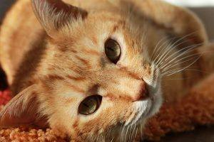 photo orange cat
